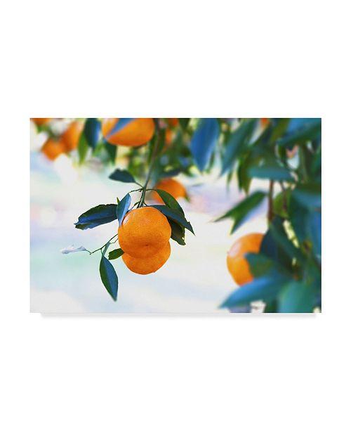 "Trademark Global Incredi 'Oranges Hanging' Canvas Art - 24"" x 16"""
