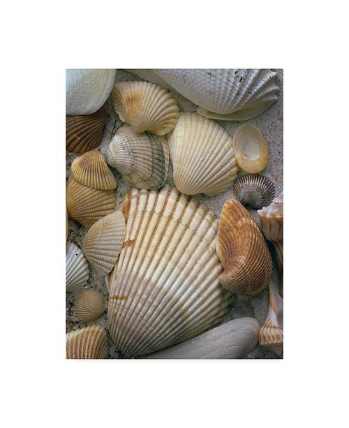 "Trademark Global J.D. Mcfarlan 'Sea Shells Laying' Canvas Art - 14"" x 19"""