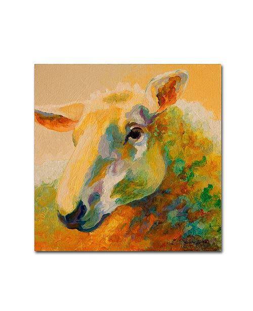 "Trademark Global Marion Rose 'Ewe Study III' Canvas Art - 35"" x 35"""