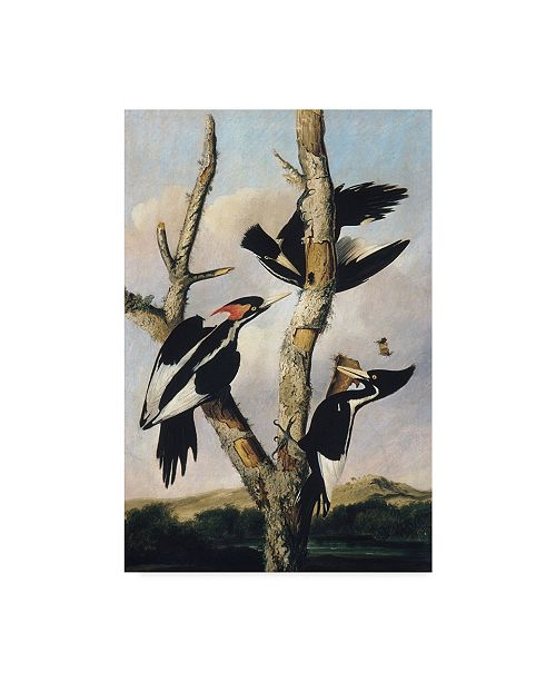 "Trademark Global Joseph Bartholomew Kidd 'Ivory-billed Woodpeckers 1830-31' Canvas Art - 30"" x 47"""