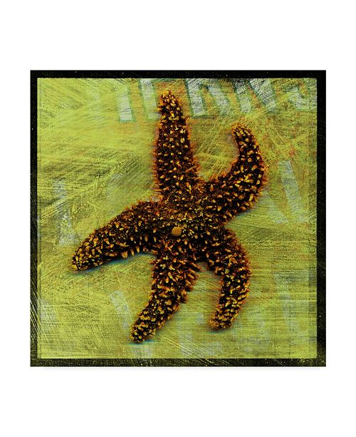 "Trademark Global John W. Golden 'Brown Starfish' Canvas Art - 24"" x 24"""