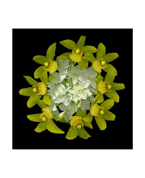 "Trademark Global Susan S. Barmon 'Paperwhites And Orchids 2' Canvas Art - 24"" x 24"""