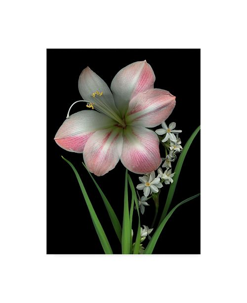 "Trademark Global Susan S. Barmon 'Apple Blossom And Paper Whites' Canvas Art - 24"" x 32"""