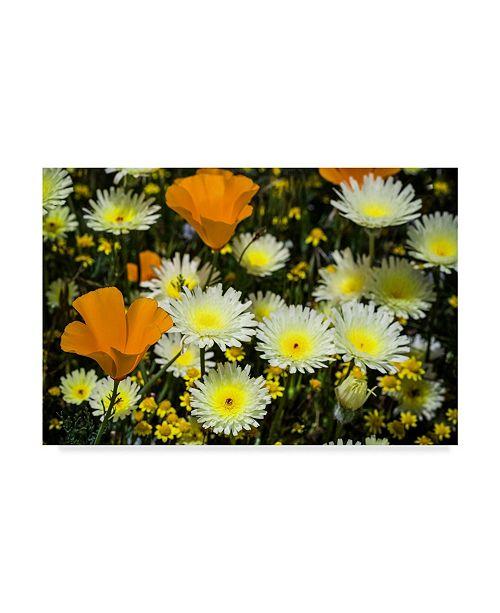 "Trademark Global Janice Sullivan 'Poppies And Daisies' Canvas Art - 32"" x 22"""