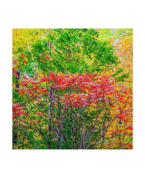 "Trademark Global Jason Matias 'Autumn I Trees Square' Canvas Art - 35"" x 35"""