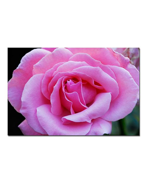 "Trademark Global Pink and Beautiful - Kurt Shaffer Canvas Art - 24"" x 16"""