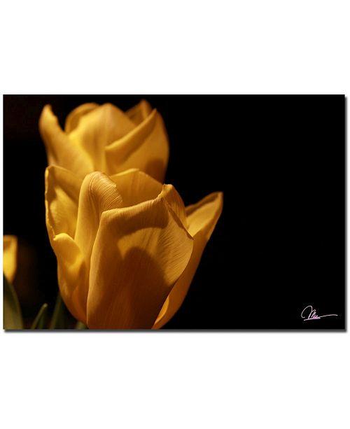 "Trademark Global Martha Guerra 'Tulip Blooms X' Canvas Art - 32"" x 22"""