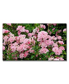 """Kathie McCurdy 'Pink Roses' Canvas Art - 24"""" x 14"""""""