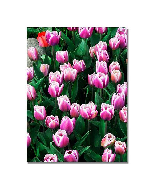 "Trademark Global Kurt Shaffer 'Purple White Tulips and One Red' Canvas Art - 47"" x 30"""