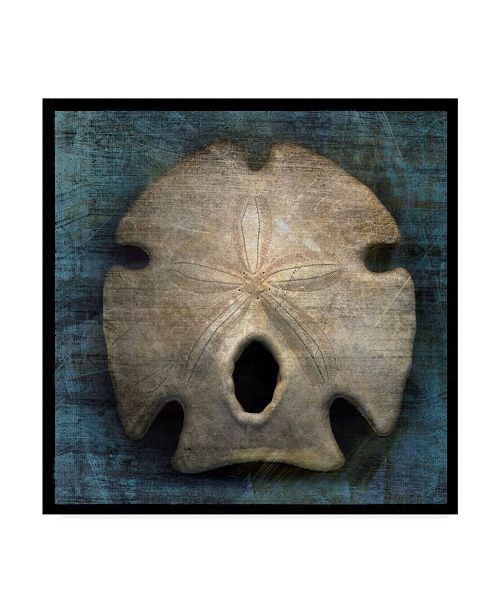 "Trademark Global John W. Golden 'Arrowhead Sand Dollar' Canvas Art - 14"" x 14"""