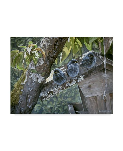 "Trademark Global Ron Parker 'Baby Blues' Canvas Art - 14"" x 19"""