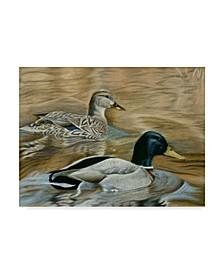 "Rusty Frentner 'Mallard Study' Canvas Art - 14"" x 19"""