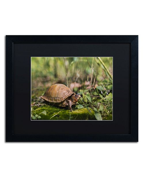"Trademark Global Jason Shaffer 'Box Turtle' Matted Framed Art - 20"" x 16"""