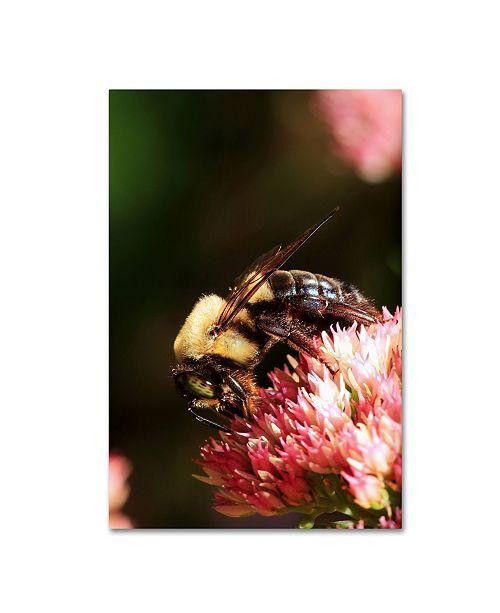 """Trademark Global Jason Shaffer 'Bumblebee' Canvas Art - 12"""" x 19"""""""