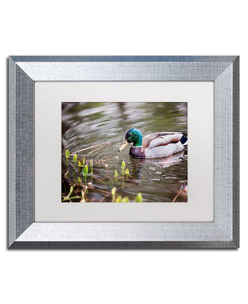 """Trademark Global Jason Shaffer 'Mallard' Matted Framed Art - 14"""" x 11"""""""
