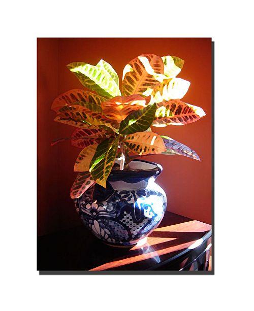 "Trademark Global Croton in Talavera Pot by Amy Vangsgard Canvas Art - 47"" x 35"""