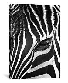 "iCanvas Zebra Stare by Bob Larson Gallery-Wrapped Canvas Print - 40"" x 26"" x 0.75"""