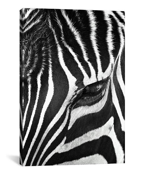 "iCanvas Zebra Stare by Bob Larson Gallery-Wrapped Canvas Print - 60"" x 40"" x 1.5"""