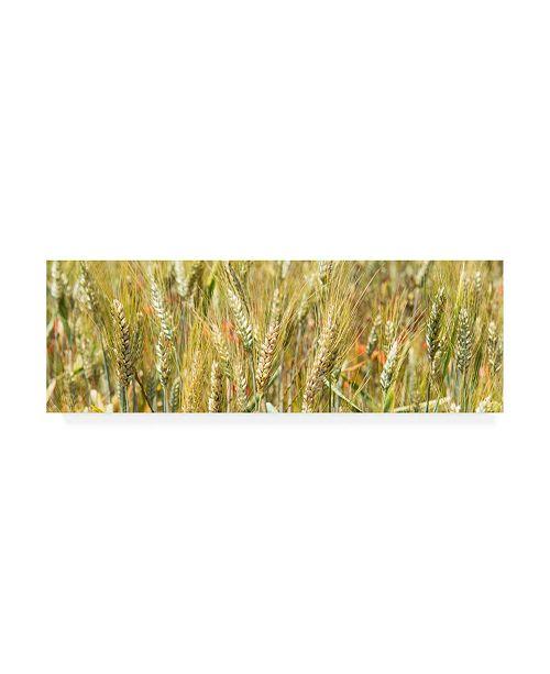 "Trademark Global Philippe Hugonnard France Provence 2 Wheat Field II Canvas Art - 27"" x 33.5"""