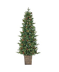 6Ft. Potted Natural Cut Georgia Pine with 200 clear lights