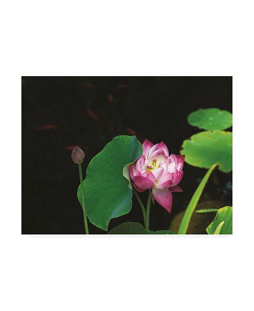 "Trademark Global Kurt Shaffer Photographs Lotus and Coi Canvas Art - 27"" x 33.5"""