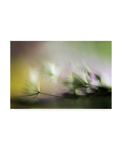 "Trademark Global Maryam Zahirimehr Dandelions in the Morning Canvas Art - 37"" x 49"""