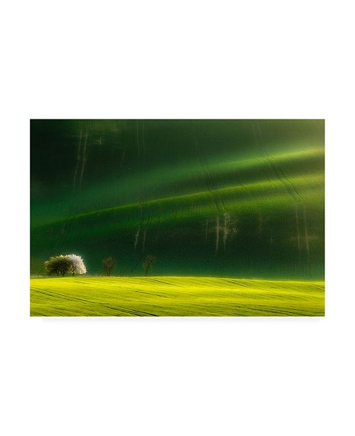 "Trademark Global Piotr Krol Bax Spring Time Trees Canvas Art - 37"" x 49"""