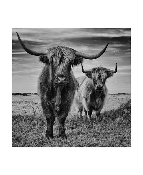 "Trademark Global Stephane Pecqueux Highlands Canvas Art - 20"" x 25"""
