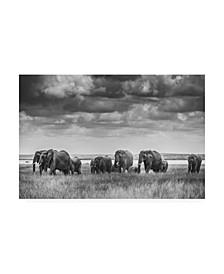 """Vedran Vidak Elephant Family Kenya Canvas Art - 20"""" x 25"""""""