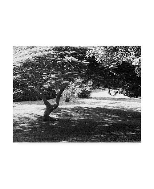 "Trademark Global Monte Nagler Bermuda Foliage Bermuda Canvas Art - 37"" x 49"""
