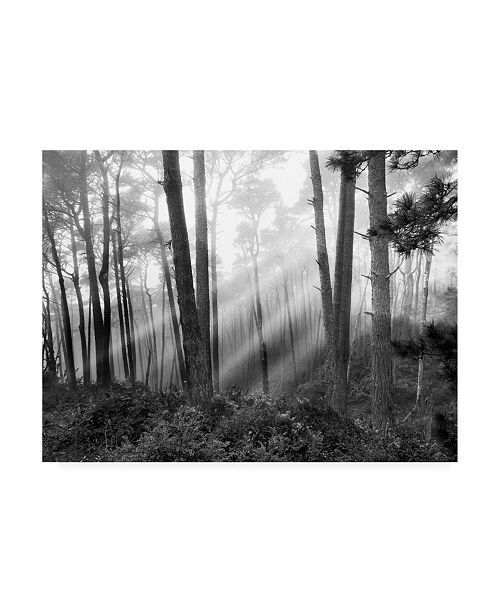 "Trademark Global Monte Nagler Mystical Forest Monterey California Canvas Art - 15"" x 20"""