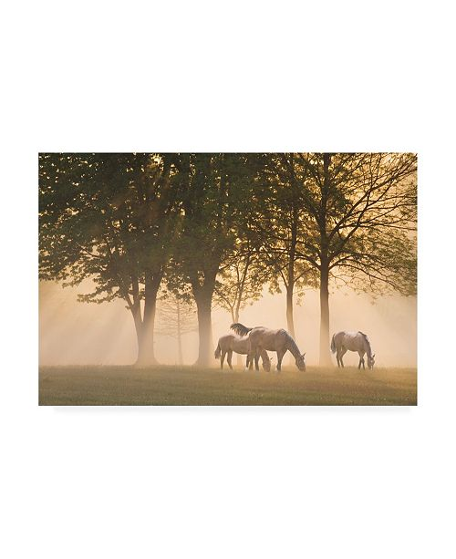 "Trademark Global Monte Nagler Horses in the Mist Canvas Art - 37"" x 49"""
