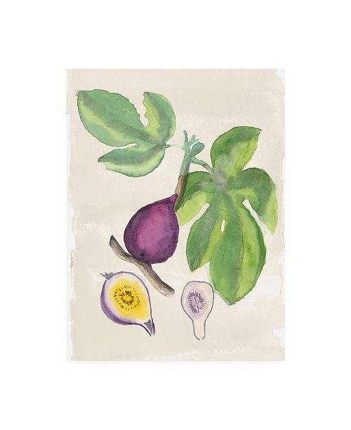 "Trademark Global Naomi Mccavitt Watercolor Fruit I Canvas Art - 37"" x 49"""