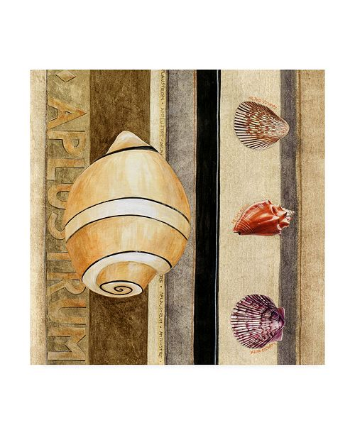 "Trademark Global Pablo Esteban Shells Over Panels 1 Canvas Art - 36.5"" x 48"""