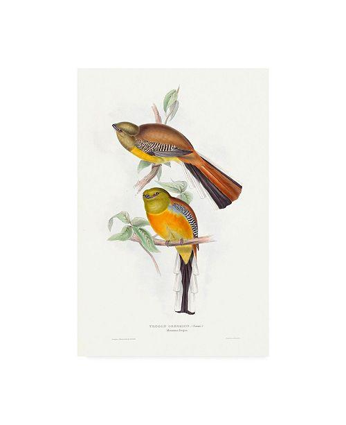"Trademark Global John Gould Tropical Trogons VI Canvas Art - 36.5"" x 48"""