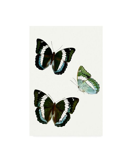 "Trademark Global Vision Studio Butterfly Specimen VIII Canvas Art - 19.5"" x 26"""