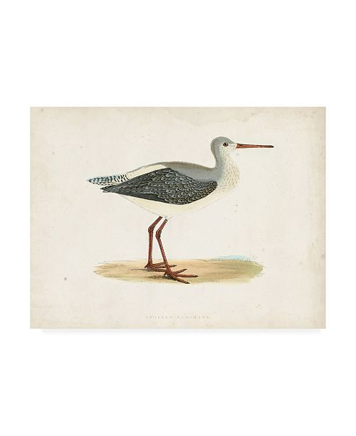 "Trademark Global Morris Morris Sandpiper I Canvas Art - 19.5"" x 26"""