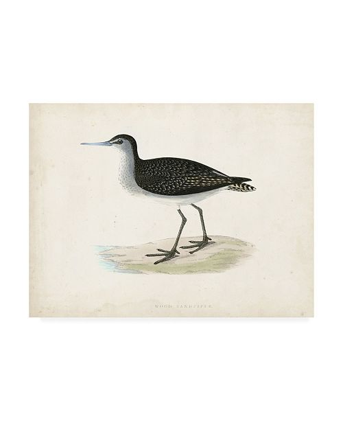 "Trademark Global Morris Morris Sandpiper VIII Canvas Art - 36.5"" x 48"""