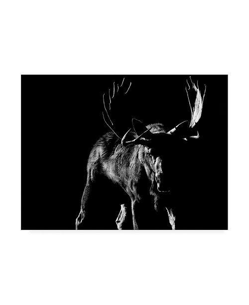 "Trademark Global Julie Chapman Bullish Canvas Art - 19.5"" x 26"""
