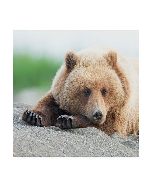 "Trademark Global PH Burchett Bear Life IV Canvas Art - 15.5"" x 21"""