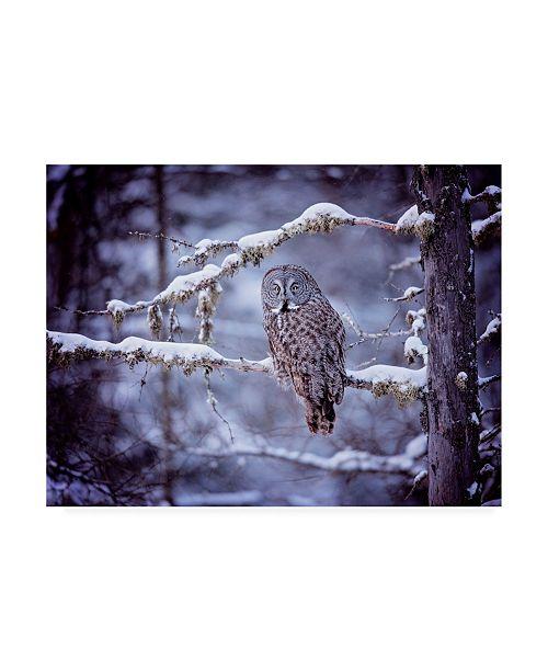 "Trademark Global PH Burchett Owl in the Snow II Canvas Art - 36.5"" x 48"""