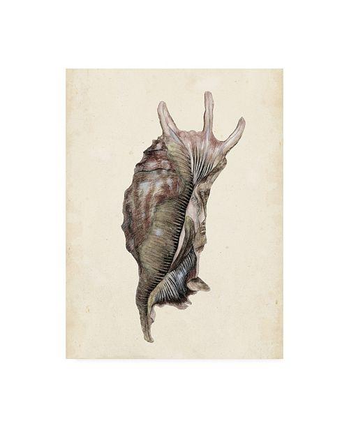"""Trademark Global Melissa Wang Watercolor Seashell IV Canvas Art - 19.5"""" x 26"""""""