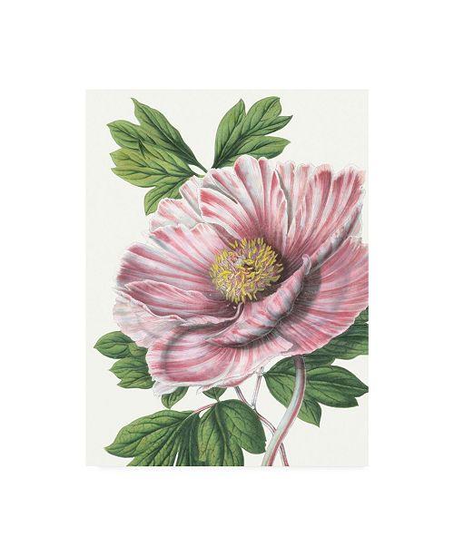 "Trademark Global Vision Studio Floral Beauty VI Canvas Art - 27"" x 33.5"""