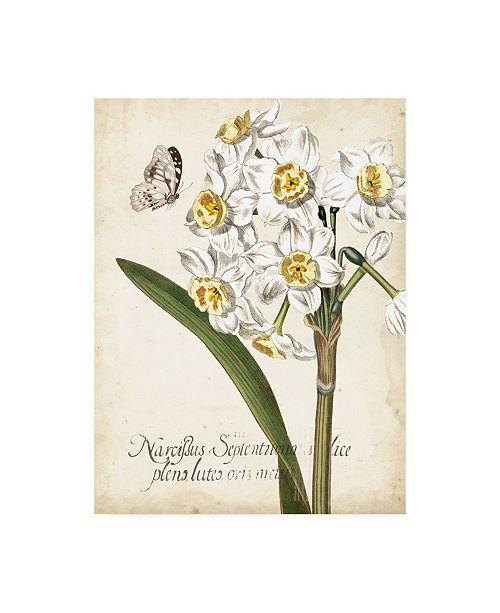 "Trademark Global Vision Studio Narcissus Botanique II Canvas Art - 36.5"" x 48"""