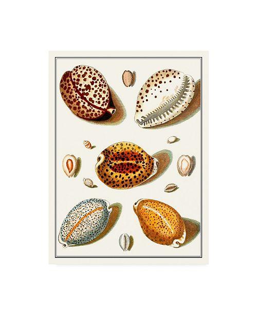 "Trademark Global Vision Studio Collected Shells III Canvas Art - 36.5"" x 48"""