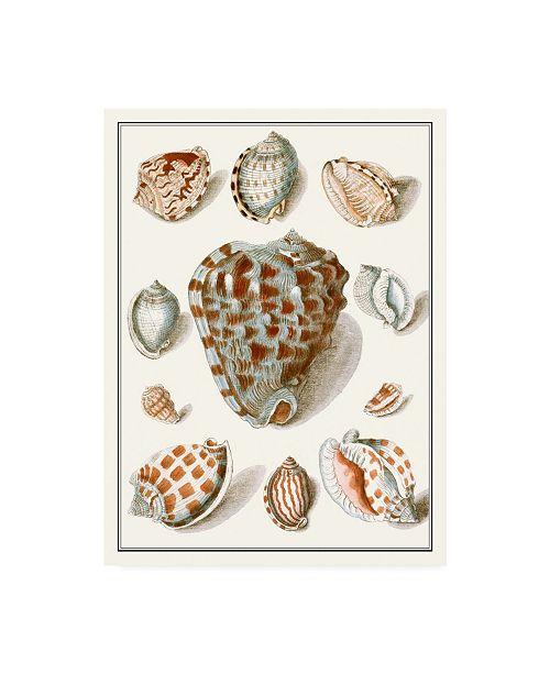 "Trademark Global Vision Studio Collected Shells VIII Canvas Art - 36.5"" x 48"""