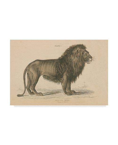 """Trademark Global Wild Apple Portfolio Vintage Lion Canvas Art - 15"""" x 20"""""""