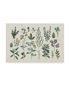 """Wild Apple Portfolio Victorian Garden III Canvas Art - 15"""" x 20"""""""
