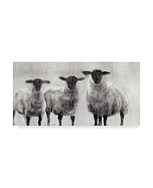 """Ethan Harper Rustic Sheep I Canvas Art - 15"""" x 20"""""""