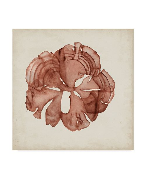 "Trademark Global Naomi Mccavitt Seaweed Specimens XIV Canvas Art - 20"" x 25"""